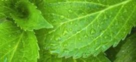 come curare le piante con metodi naturali