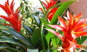 Piante Tropicali Da Appartamento.Cure Per Le Piante Tropicali Da Appartamento Dojo Garden